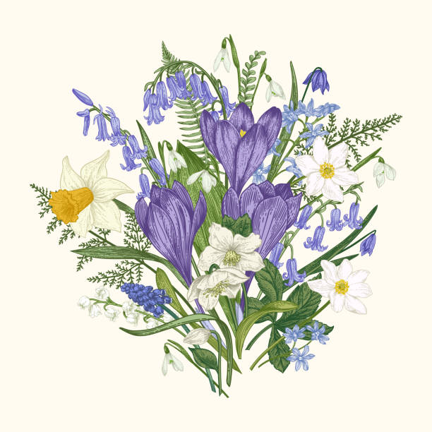 illustrations, cliparts, dessins animés et icônes de bouquet de fleurs. - crocus