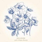 istock Bouquet of hellebore flowers. 668132638