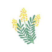 A nice bouquet of mimosa flowers and leaves. Great for Spring and Easter greeting cards. Hand drawn vector illustration isolated on white background.
