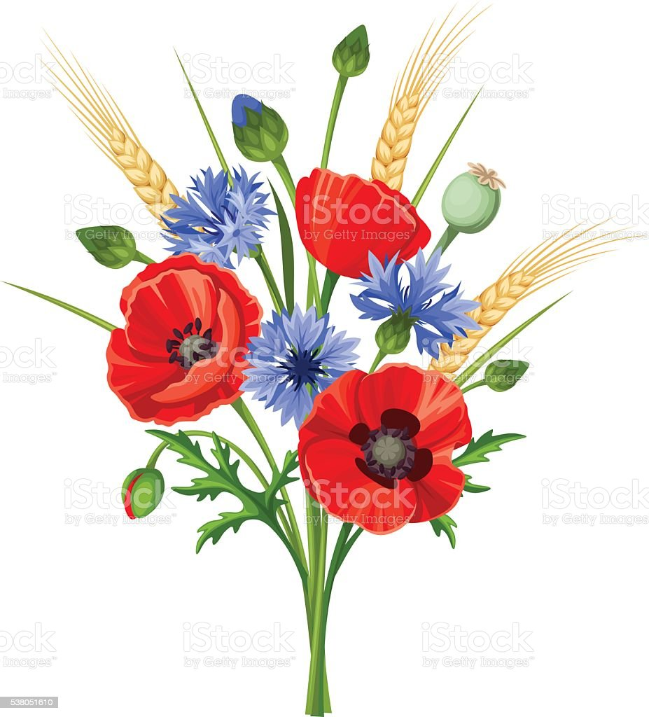Bouquet of poppy flowers and cornflowers vector illustration stok bouquet of poppy flowers and cornflowers vector illustration royalty free bouquet of poppy izmirmasajfo