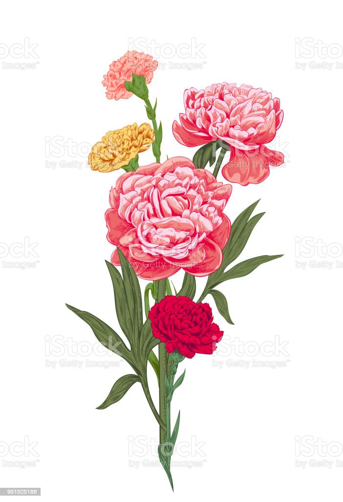 This is a graphic of Clever Pink Carnation Drawing
