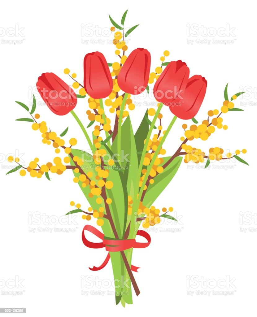 Bouquet of red tulips and mimosa vector art illustration