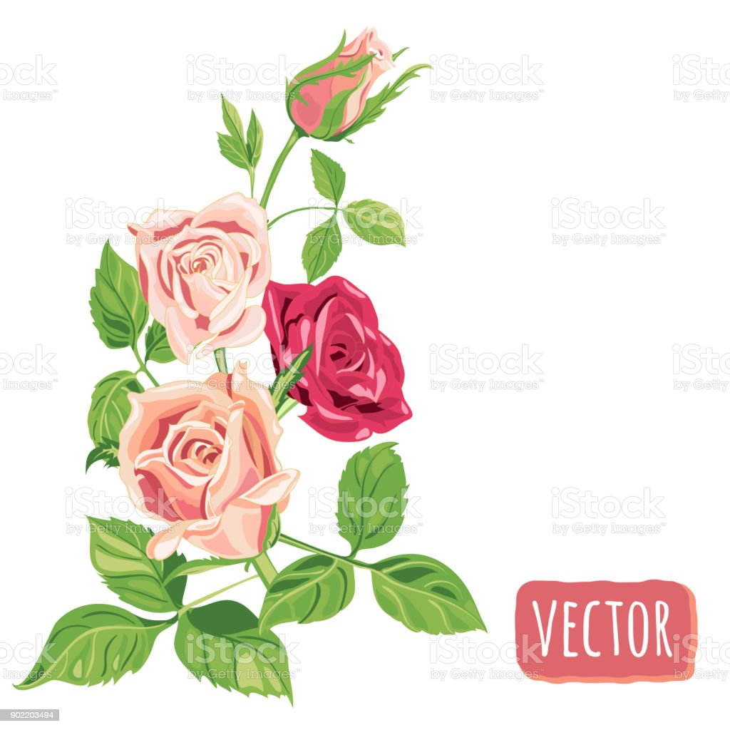 Bouquet Of Roses Pink And Red Flowers Green Leaves On White