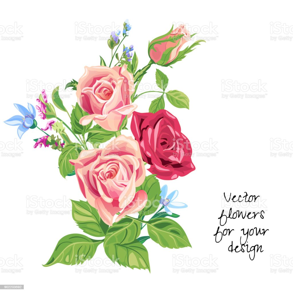 Bouquet Of Roses Pink Red Blue Flowers And Bud Green Leaves On White ...