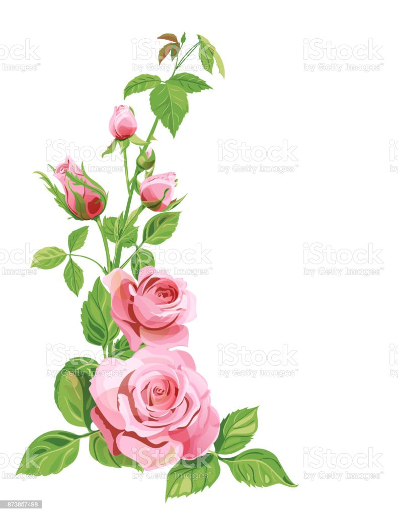 Bouquet Of Roses Pink Red Flowers And Buds Green Leaves On White ...