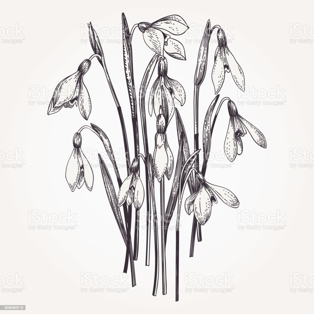 Bouquet of snowdrops.