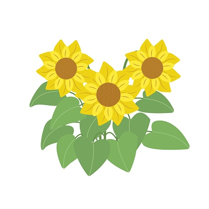 Bouquet of sunflowers, autumn flowers. Illustration in flat style, isolated.