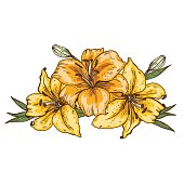 Bouquet of three yellow lily flowers hand drawn isolated on white background. Vector illustration.