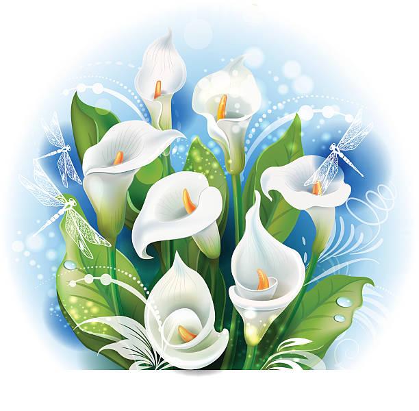 Bouquet de lys Calla blanc - Illustration vectorielle