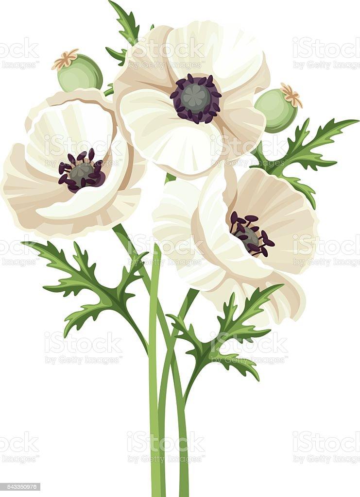 Bouquet of white poppy flowers vector illustration stock vector art bouquet of white poppy flowers vector illustration royalty free bouquet of white poppy mightylinksfo