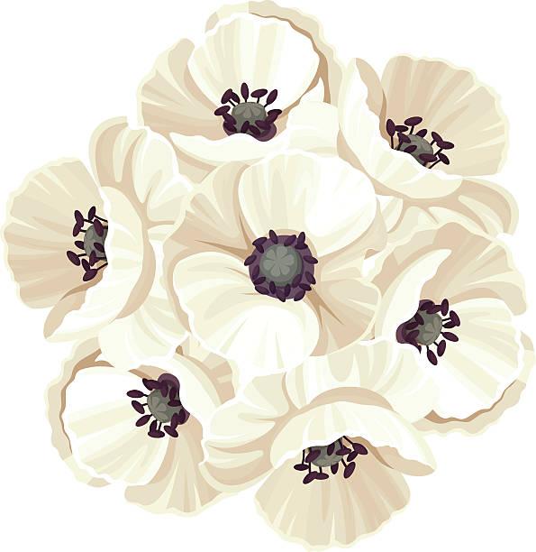 Royalty Free White Poppy Flower Clip Art, Vector Images ...