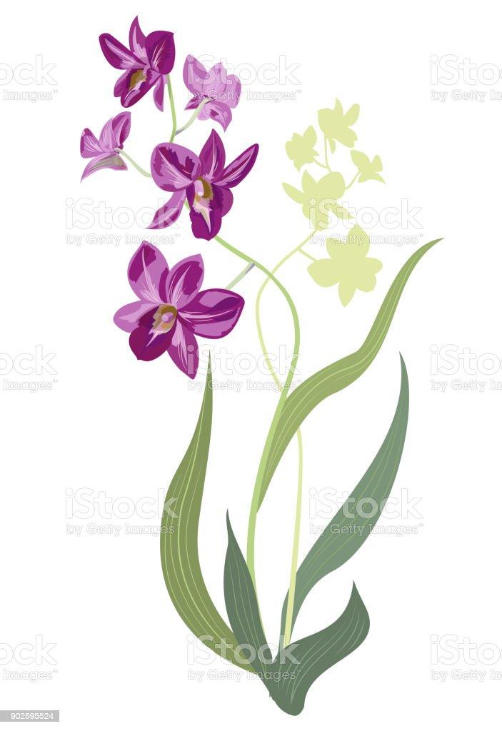bouquet orchids dendrobium phalaenopsis purple yellowgreen flowers