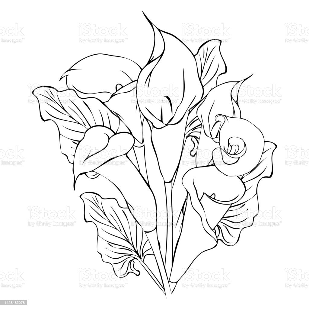 Bouquet With Calla Lily Flowers Illustration Stock Illustration