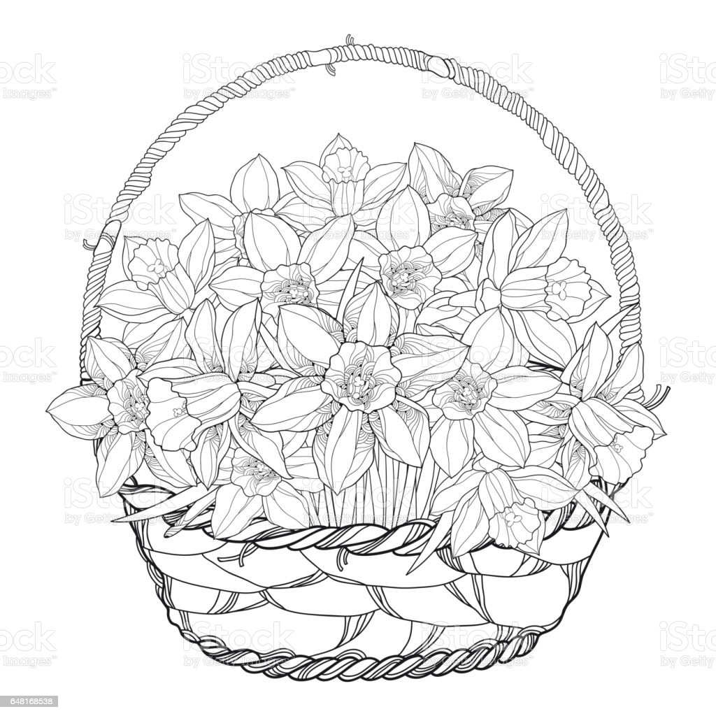 bouquet with narcissus or daffodil in the basket isolated on white