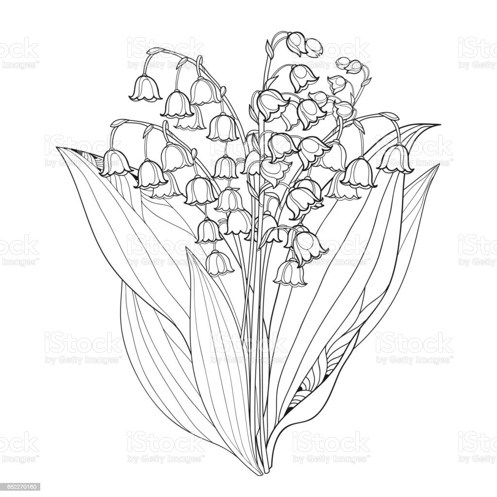 Bouquet with outline lily of the valley or convallaria isolated on bouquet with outline lily of the valley or convallaria isolated on white royalty free izmirmasajfo