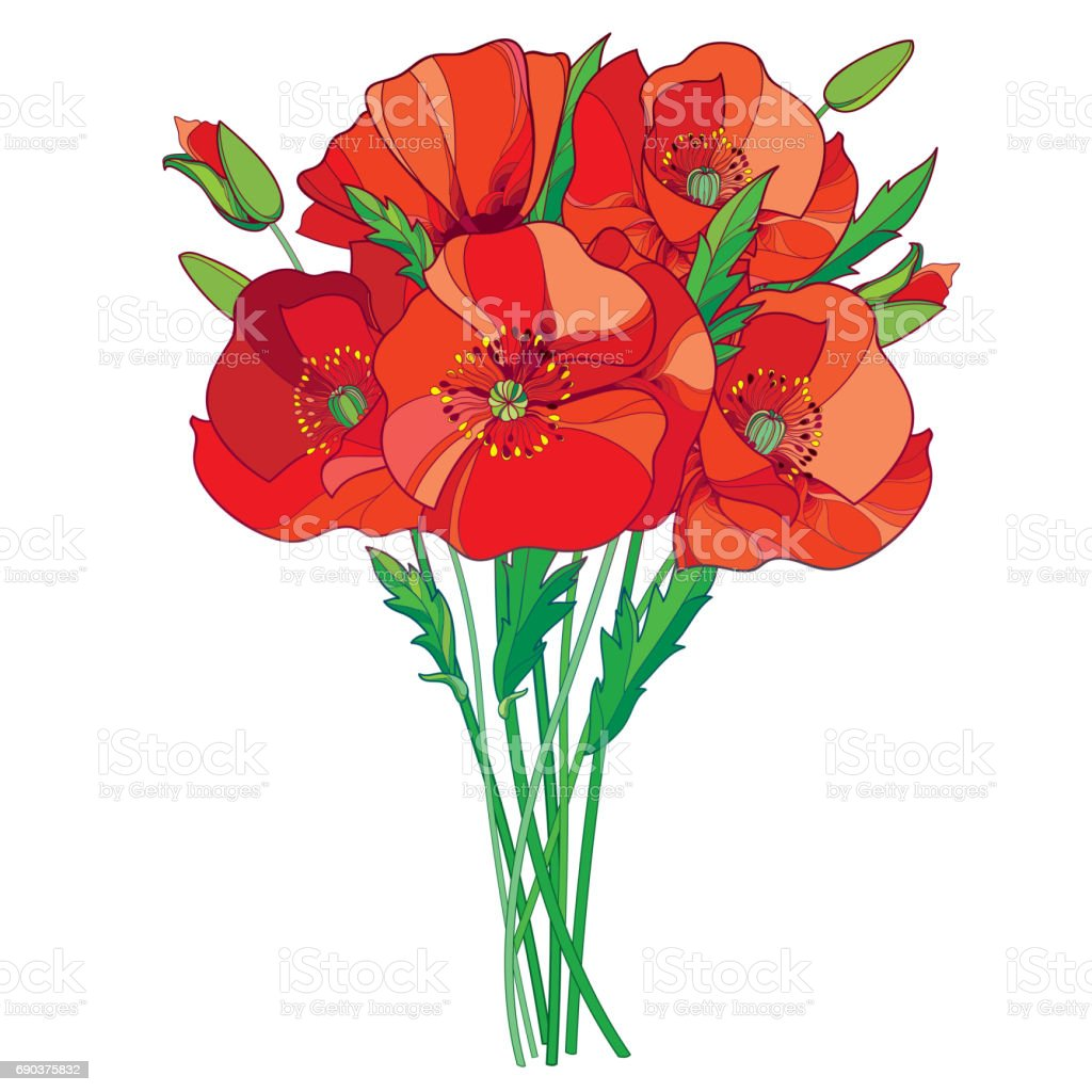 Bouquet With Red Poppy Flower Bud And Green Leaves Isolated On White