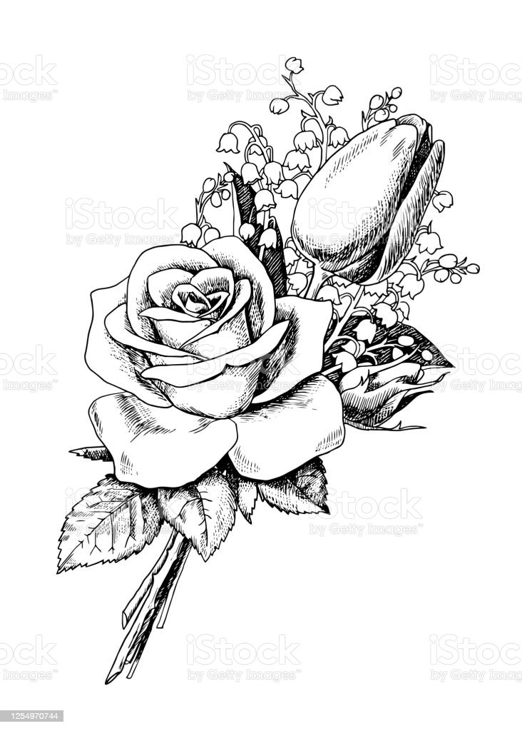 Bouquet With Rose And Tulip Stock Illustration Download Image Now Istock