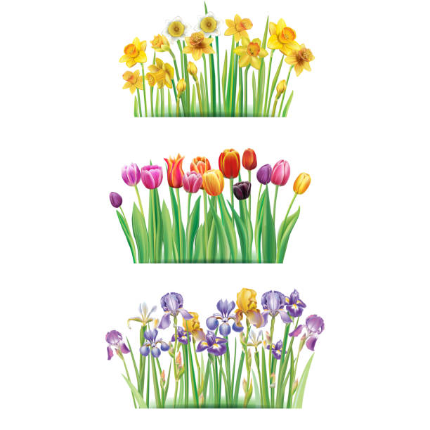 Bouquet with spring flowers Bouquet with spring flowers Tulips, Irises, Daffodilses daffodil stock illustrations
