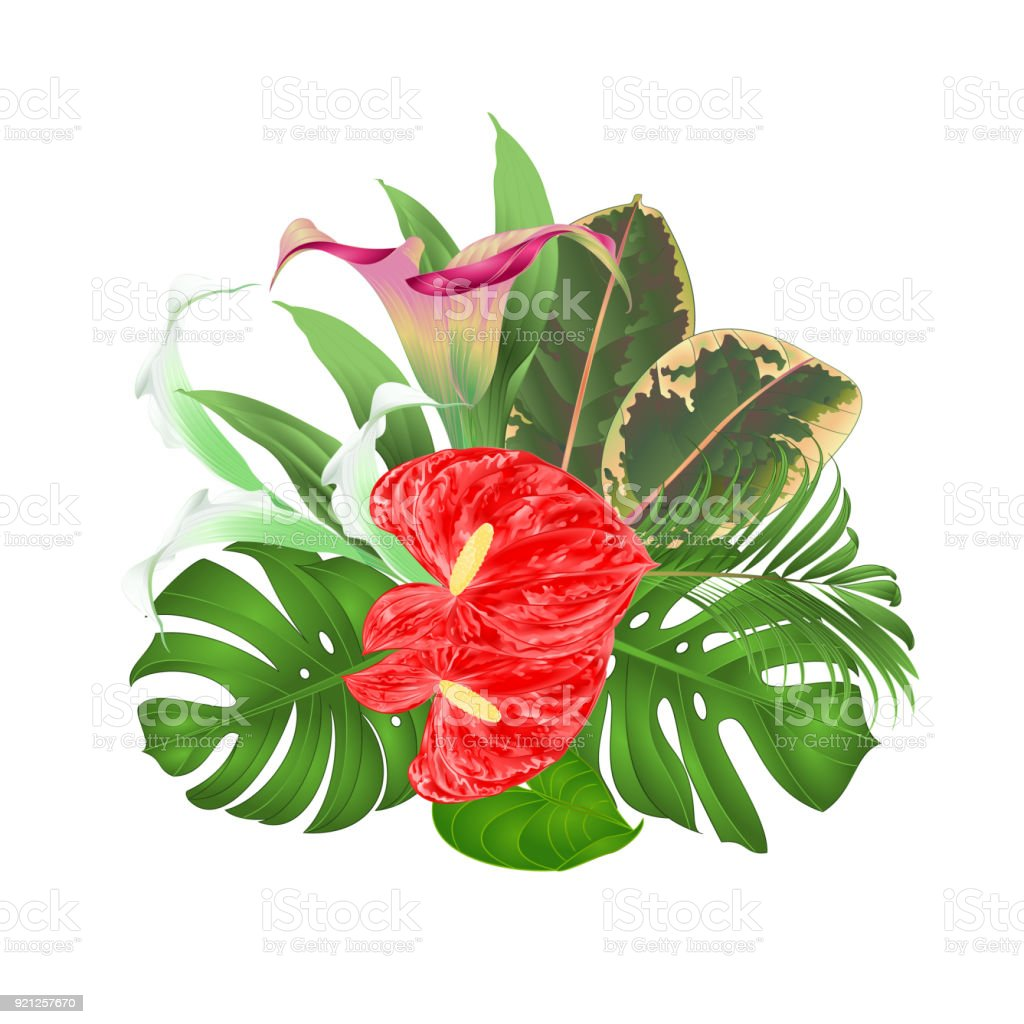 Bouquet With Tropical Flowers Floral Arrangement With Beautiful