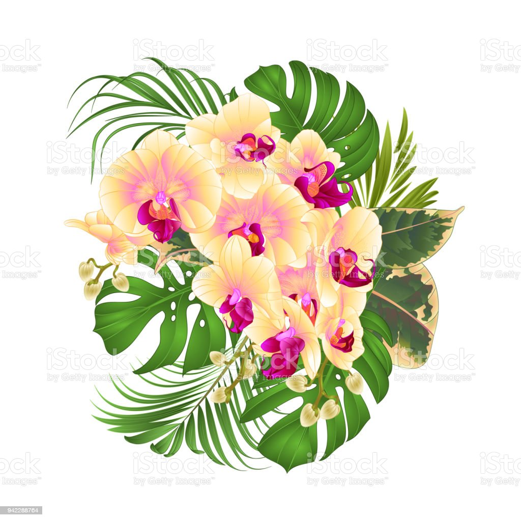 Bouquet With Tropical Flowers Floral Arrangement With Beautiful ...
