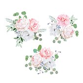 Bouquets of rose, peony, anemone, camellia, brunia flowers and eucaliptis leaves. Vector design elements.