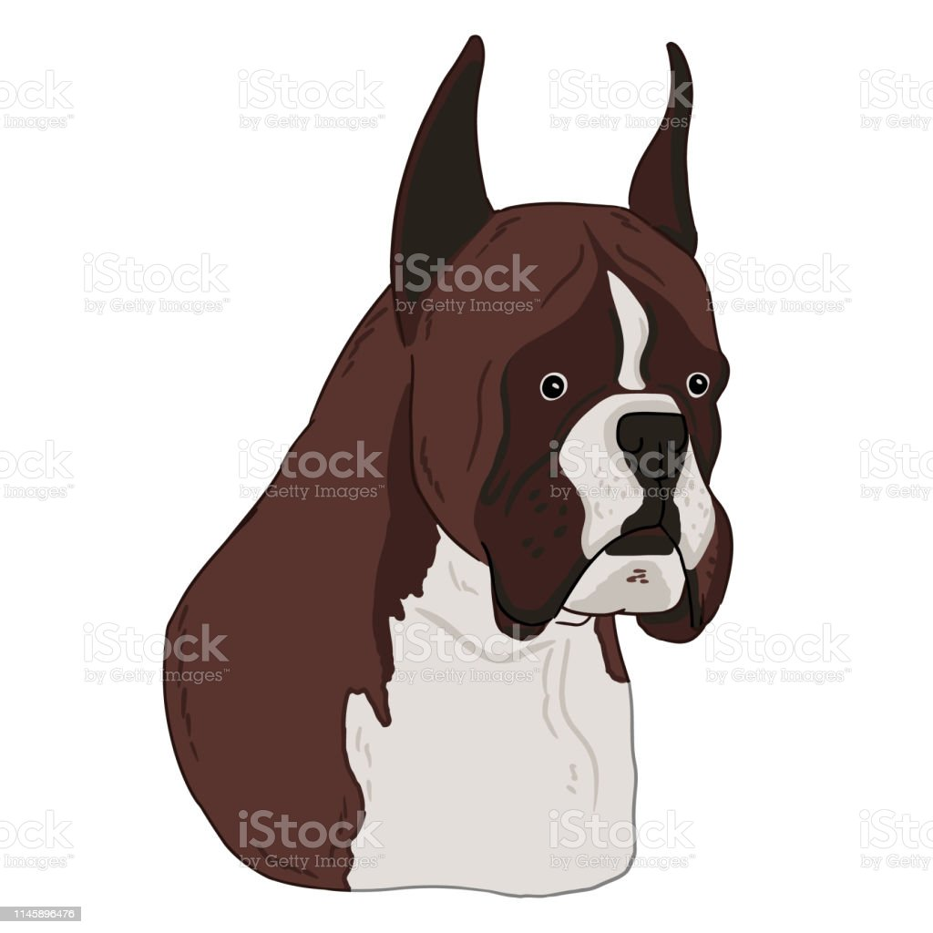Boxer dog animal cute face. Vector illustration of cartoon simple dog...