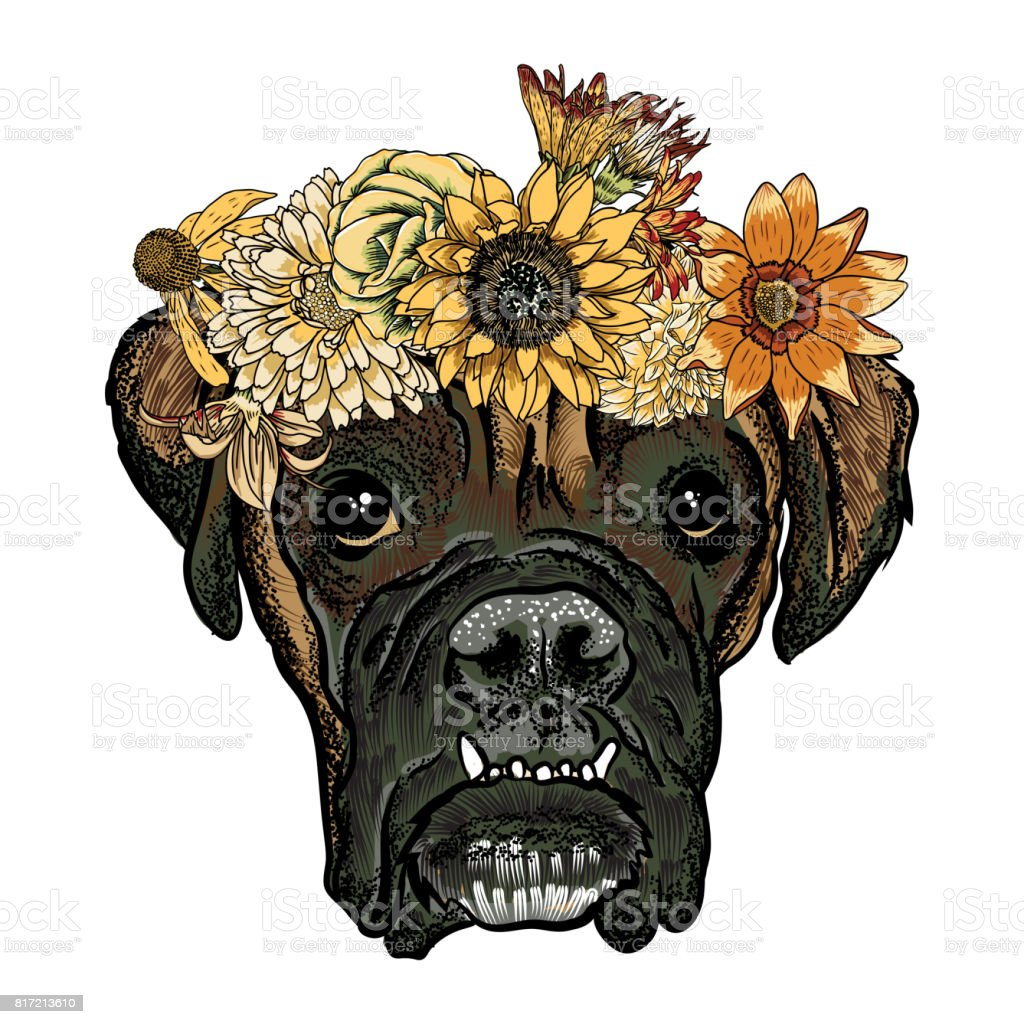 Ilustración De Cachorro De Boxer En La Corona De Corona De Rosas De