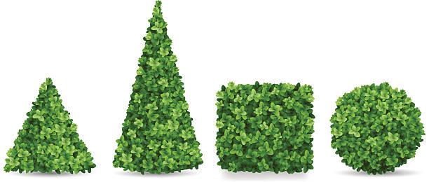 Buxo arbustos de diferentes formas de topiarias - ilustração de arte em vetor