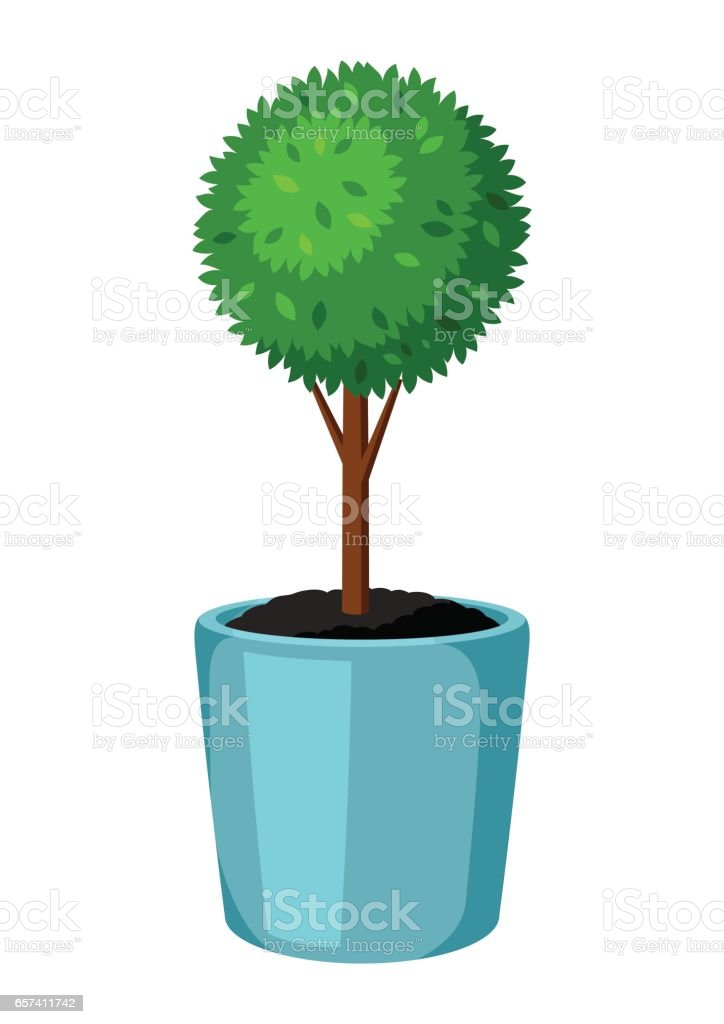 boxwood topiary garden plant decorative tree in flowerpot royaltyfree stock vector art