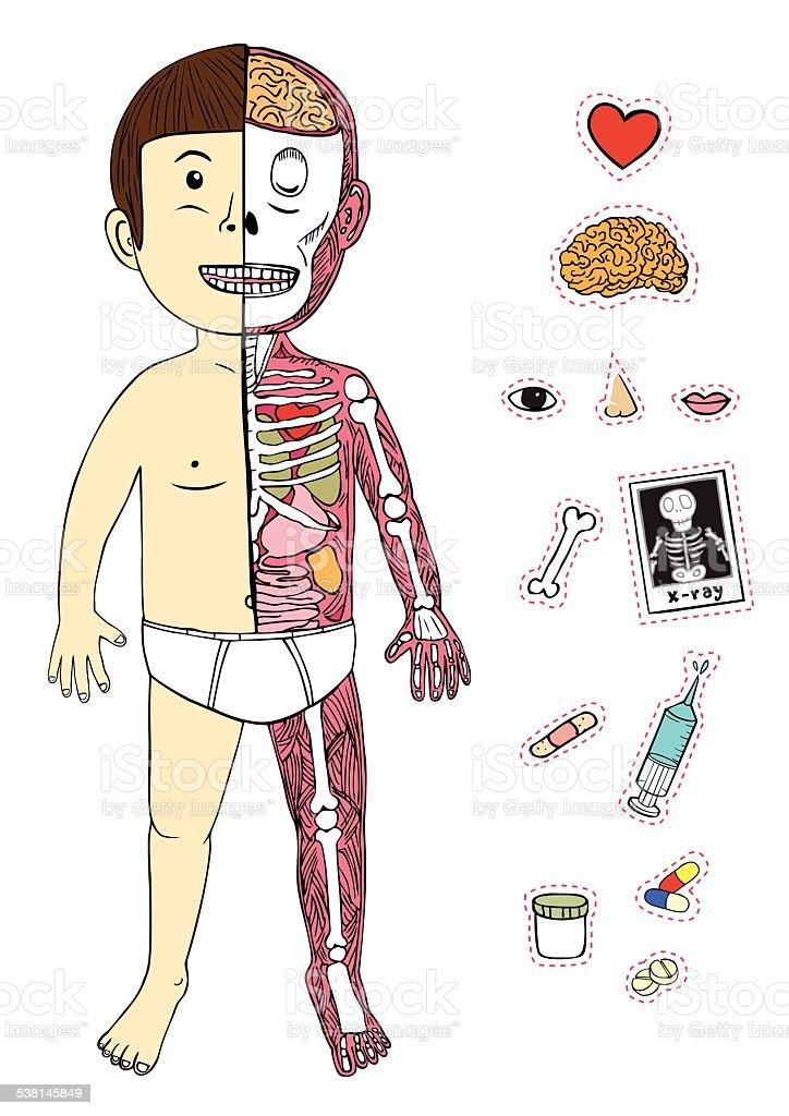 Großartig Cartoon Menschliche Körper Fotos - Anatomie Von ...