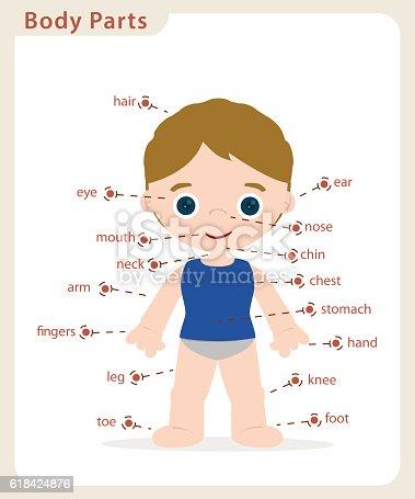 Boy Body Parts Stock Vektor Art und mehr Bilder von Anatomie ...