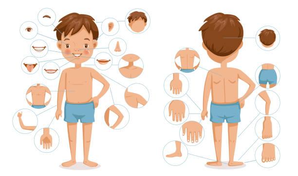 ciało chłopca - ludzkie części ciała stock illustrations