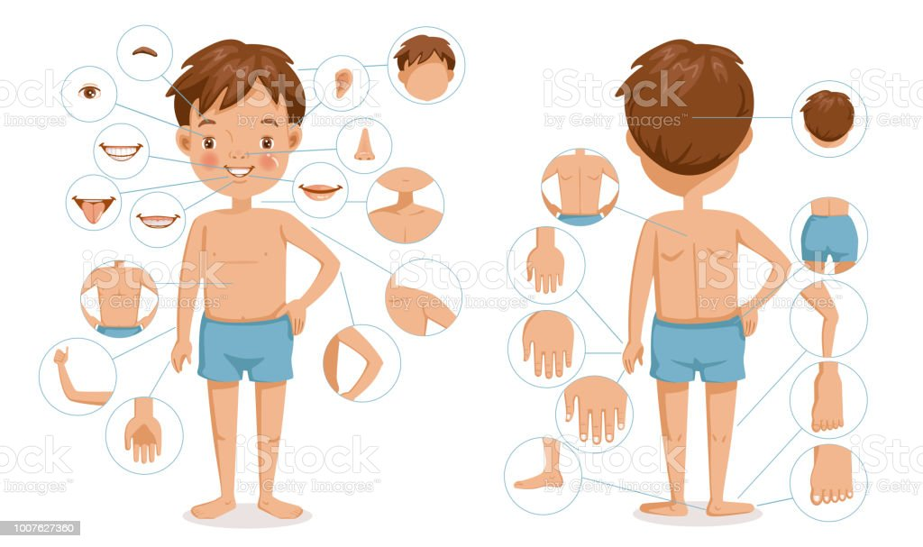 Boy body vector art illustration