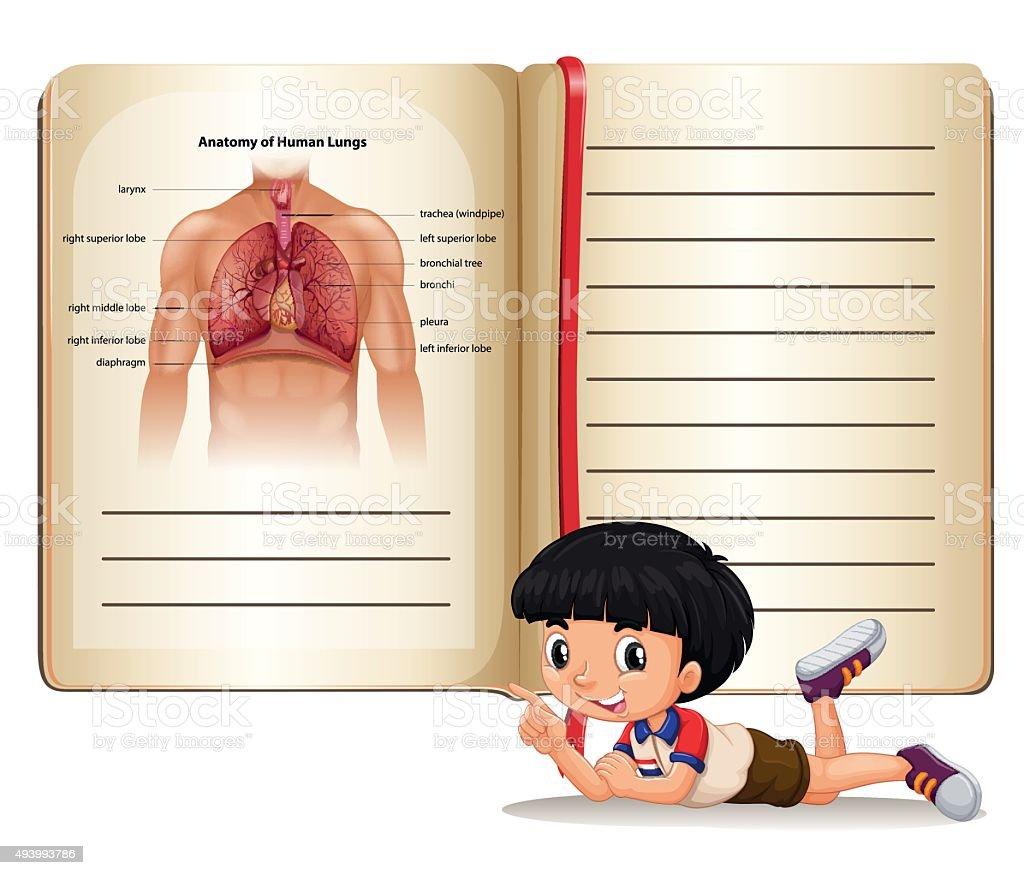 Junge Buch Menschliche Anatomie Stock Vektor Art und mehr Bilder von ...