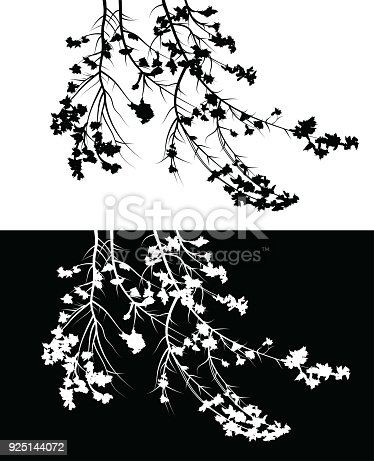 Branches with flowers coming down from a tree