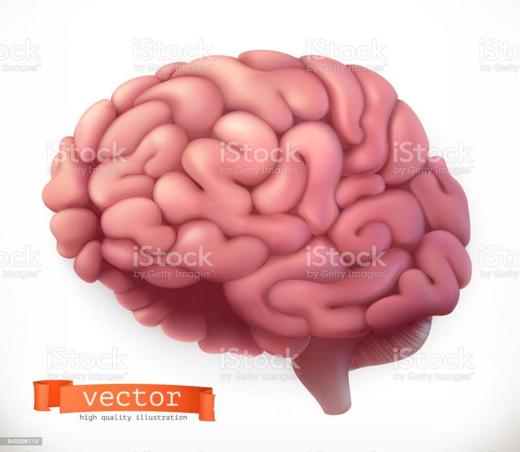 Ilustración de Cerebro 3d Icono Vector y más banco de imágenes de ...