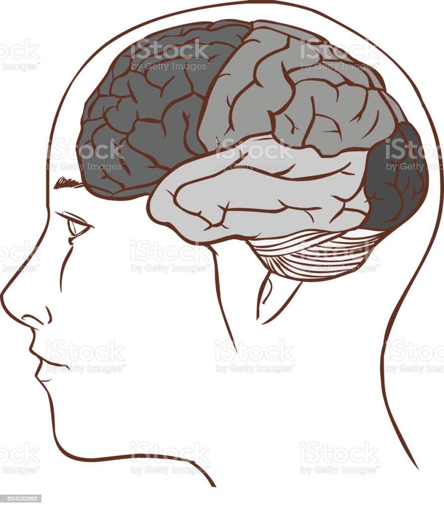Großartig Gehirn Anatomie Diagramm Fotos - Menschliche Anatomie ...