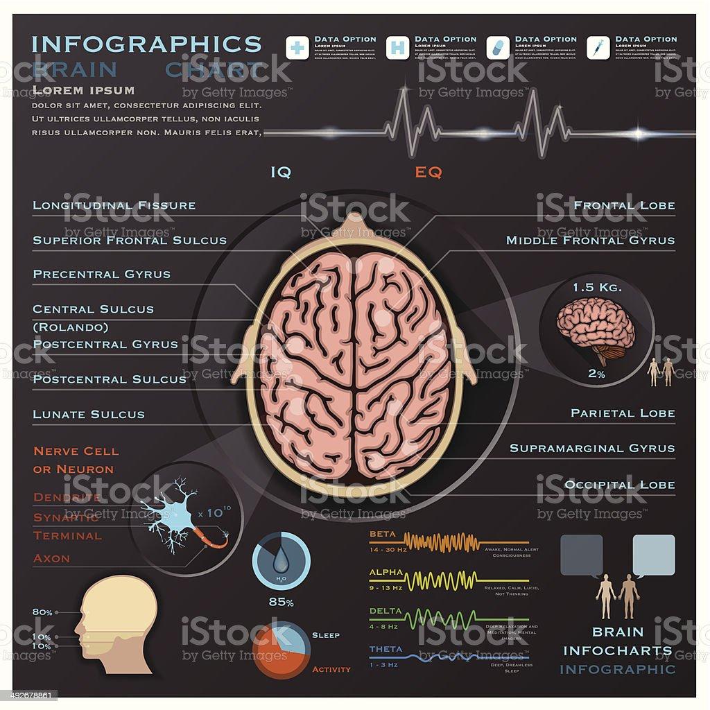 Ilustración de El Cerebro Y Médicos Infografía Infochart Sistema ...