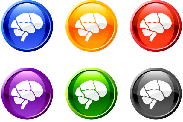 Brain button royalty free vector art Each icon is grouped auditory cortex stock illustrations