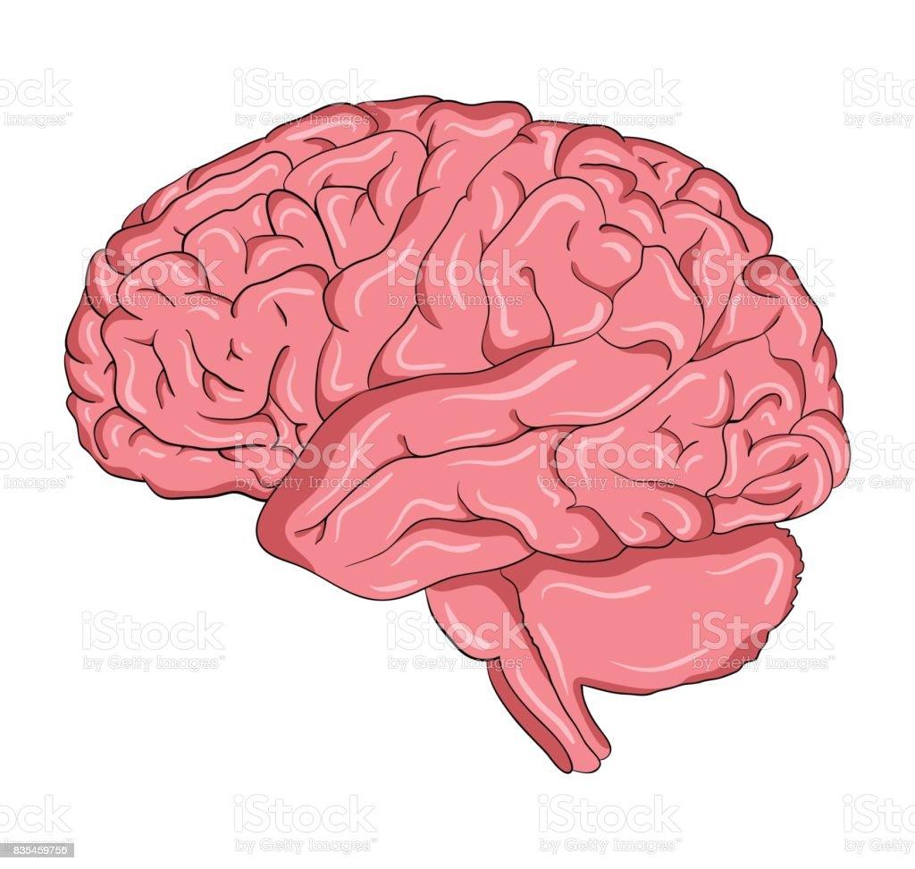 Ilustración de Cerebro De Dibujos Animados Vector Símbolo Icono ...
