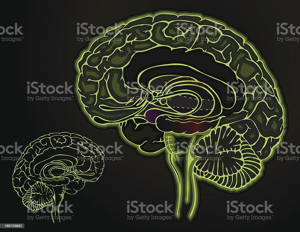 Brain - Dark vector art illustration