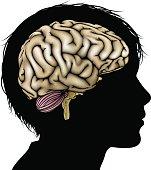 Brain development concept