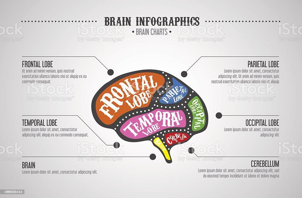 Ilustración de Cerebro Dividida De Color De Las Piezas Cerebro ...