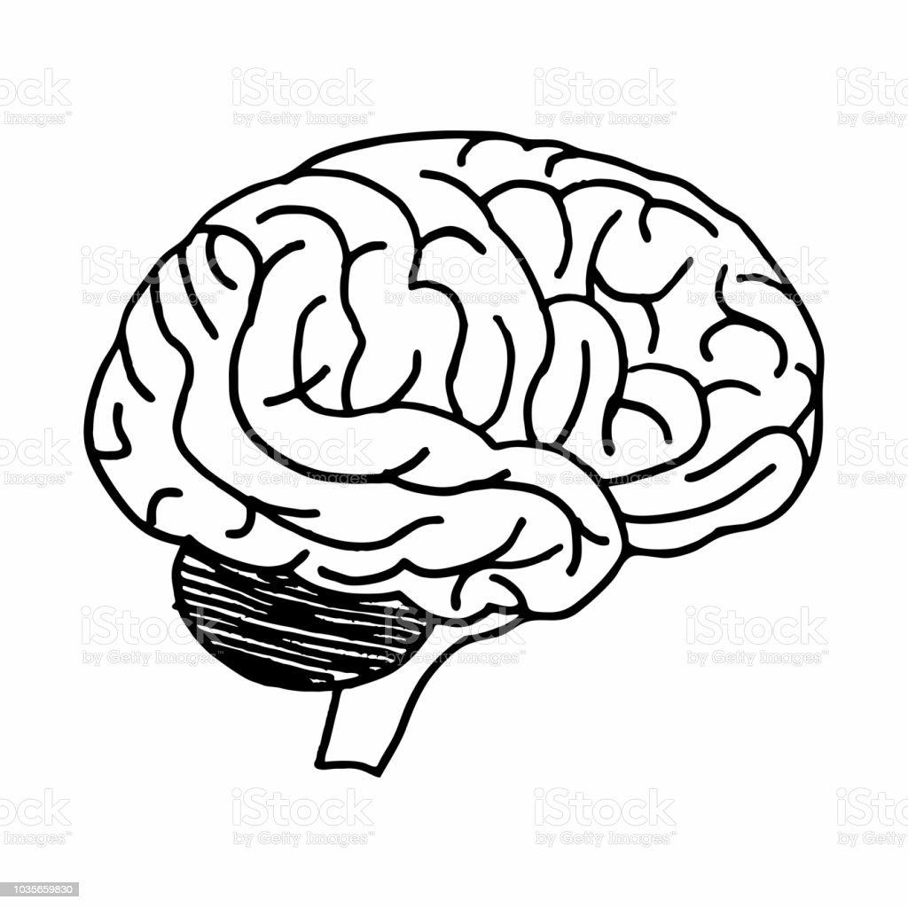 Brain freehand illustration - illustrazione arte vettoriale