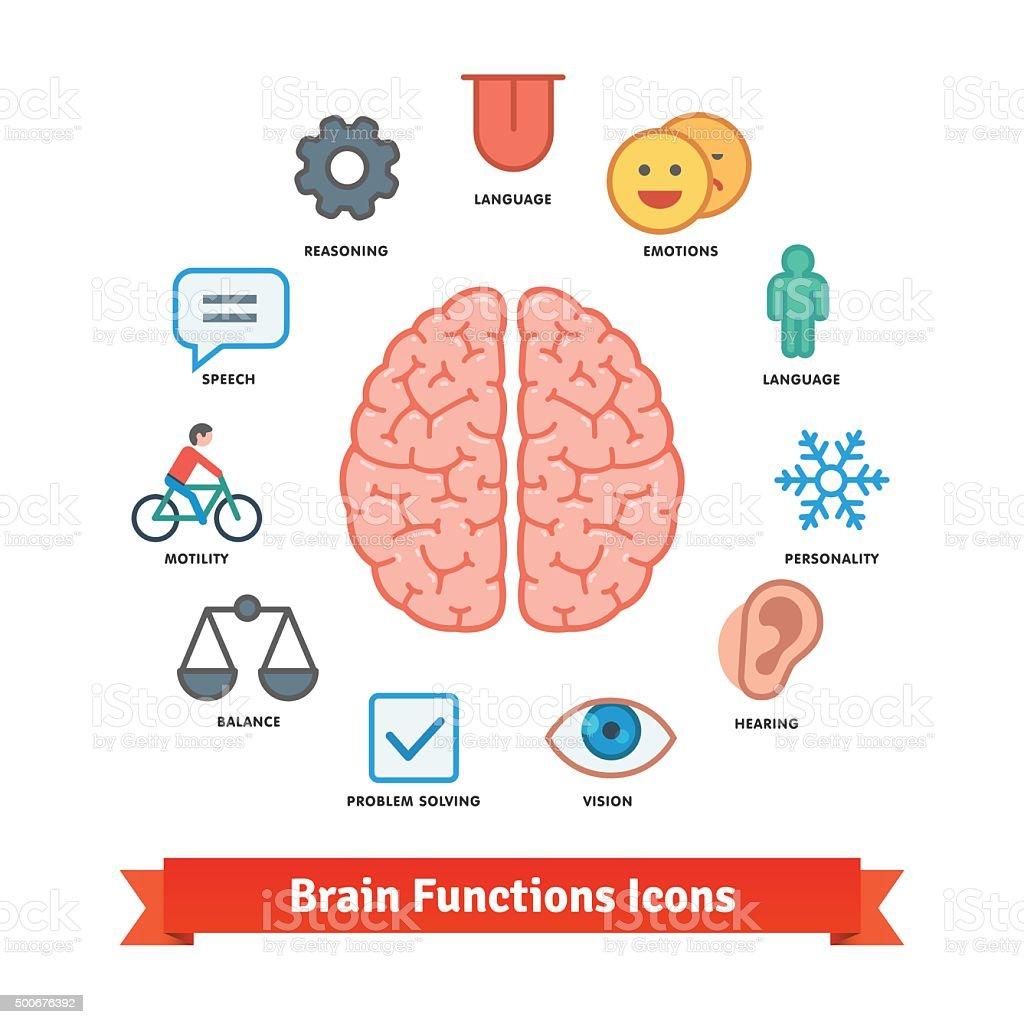 Ziemlich Menschliches Gehirn Diagramm Und Funktionen Galerie ...