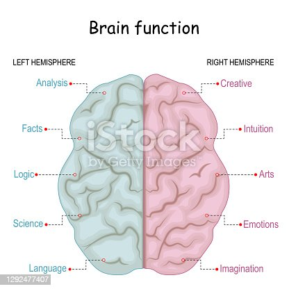 Brain function. left analytical and right creative of Cerebral hemispheres. Creative part and logical part of human's brain