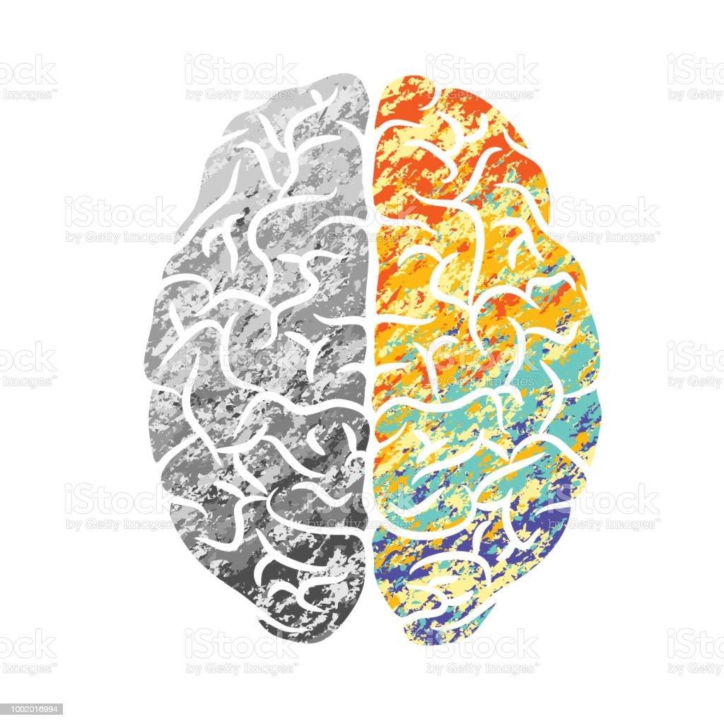 Gehirngrau Und Farbe Stock Vektor Art und mehr Bilder von Anatomie ...