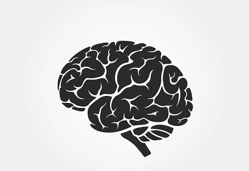 brain icon, side view. isolated vector mind, psychology and medical symbol