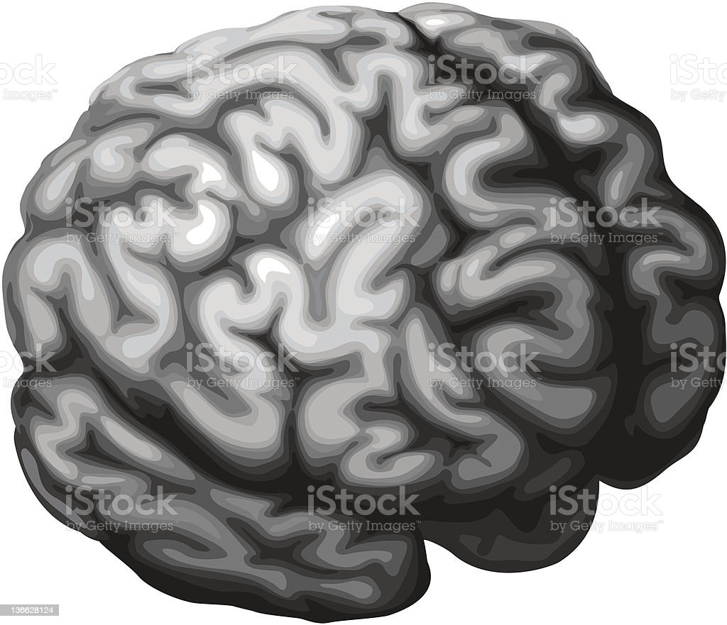 Brain illustration royalty-free stock vector art