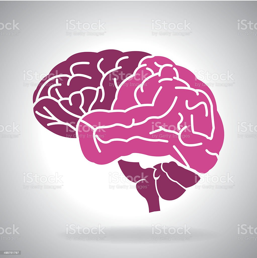Brain illustration royalty-free brain illustration stock vector art & more images of cerebellum